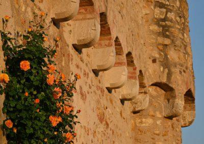 rosen an der burgmauer eltville